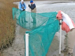 Marine technicians Jennifer Hemphill, Matthew Metcalf and Sara Kerner set fyke nets (traps used to collect marsh-associated finfish and shellfish) near Point-aux-Pins, AL. (Photo credit: Ryan M. Moody)