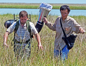 "Xuan (right) and Ben Adams, AKA ""Max,"" (left) collect insects in Louisiana marshes using a vacuum. (Photo provided by Xuan Chen)"