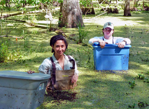 Xuan (not pictured) received a lot of helpful assistance from student workers Theresa Crupi (left) and Alexander Sabo (right). Here, they set traps in the trees at Jean Lafitte National Park and Preserve in order to collect ants. (Photo provided by Xuan Chen)