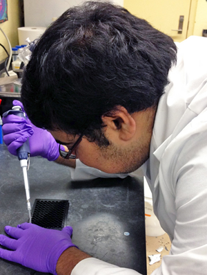 Subham conducts an ethoxyresorufin-O-deethylase or EROD assay to measure the activity of the detoxifying enzyme CYP1A1 under PAH exposure. (Provided by Subham Dasgupta)