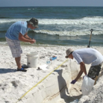 Jonathan Delgardio and Will A. Overholt (Georgia Institute of Technology) collect samples from a Pensacola Beach sand trench with oil layers. (Photo by Markus Huettel)