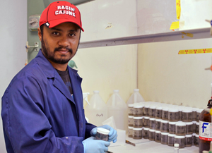 Nihar conducts a 14C-radiolabeled naphthalene assay in a radioactive laboratory to determine naphthalene degradation rate using sediments after each greenhouse microcosm experiment. (Photo credit: Suchandra Hazra)