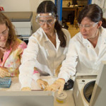 University of West Florida Associate Professor in Chemistry, Pam Vaughan (far right), mentors undergraduate students Cynthia McCord and Michelle Waters in determining photochemical degradation and relative toxicity of MC252 and Surrogate oil water accommodated fractions. (Photo credit: Michael Spooneybarger)