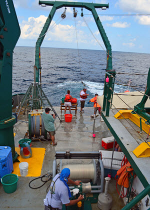 Longline fish sampling on board the R/V Weatherbird II, August 2013. (Photo credit: C-IMAGE Consortium)