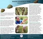 Marsh Periwinkle Snail