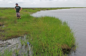 Ph.D. student Stephen Formel helps collect soil at Bay Jimmy in Barataria Bay. (Photo by Brittany Bernik)