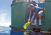 John Stieglitz and Lela Schelnker release a mahi back into the ocean after tagging and recovering for 24 hours. (Provided by RECOVER)
