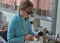 Melissa identifies a copepod at the Copepod workshop in South Korea. (Provided by Melissa Rohal)