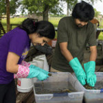 Devika and Chinmay Tikhe floating tabanid larvae out of marsh sediments. (Photo by Claudia Husseneder)